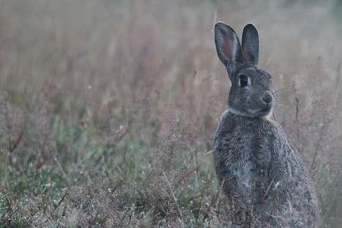 animal gray rabbit on green grass field kangaroo