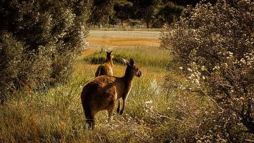 mammal brown deer running on grass field animal