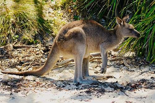wallaby kangaroo near green-leaf plants during daytime animal