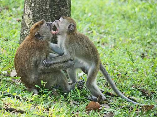 animal two monkey sits near tree kangaroo
