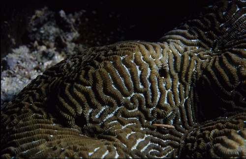 nature One Tree Reef. Coral.  water
