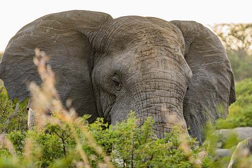 elephant  wildlife
