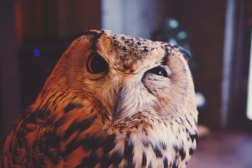 bird beige and black owl brown