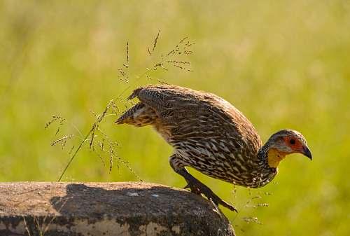 bird bird about to fly nairobi national park