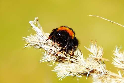 apidae black and brown spider on flower bee