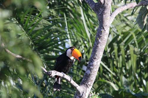 beak black and orange bird fetched on tree branch nature