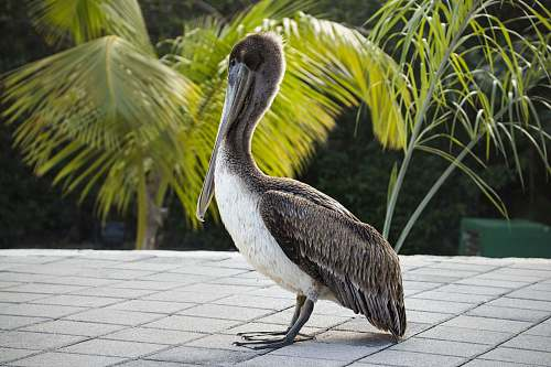 photo bird black and white bird on gray concrete floor anhinga free for commercial use images
