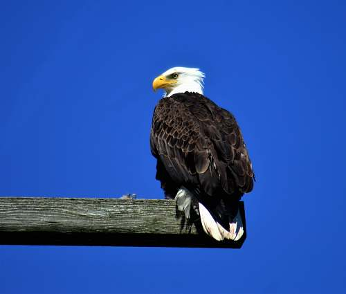 bird black and white eagle perching on wood eagle