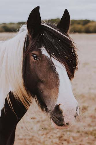 mammal black and white stallion horse in field g horse
