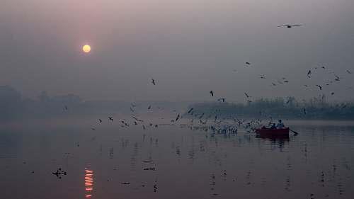 flock boat sailing in water grey