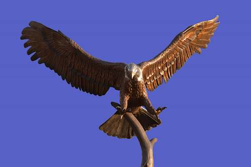 bird brown and white eagle statue vulture
