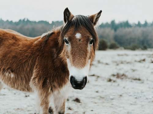 mammal brown and white fur horse standing on brown soil horse