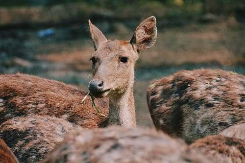 mammal brown doe kangaroo