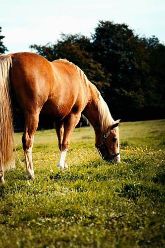 horse brown horse on grass field nature