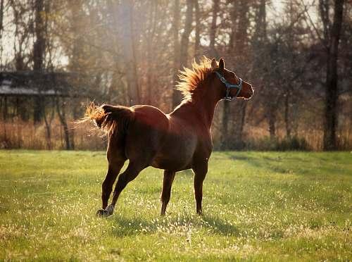 mammal brown horse photograph horse