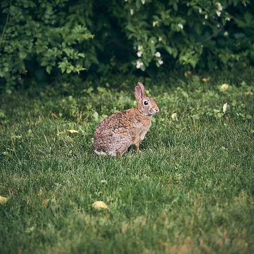 mammal brown rabbit near plant rodent