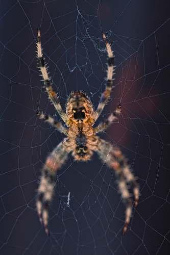 invertebrate brown spider on web spider