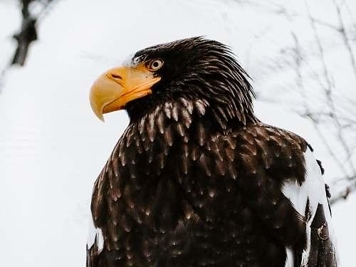 bird close-up photography of eagle eagle