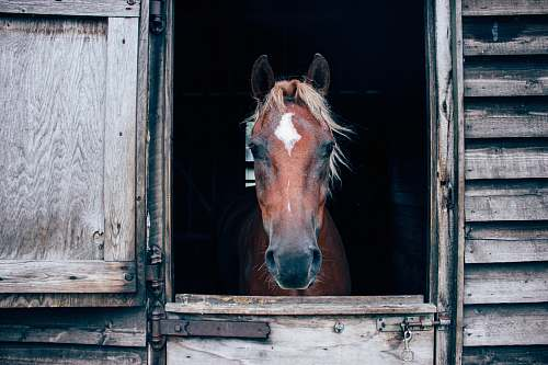 photo mammal close-up photography of horse in barn colt horse free for commercial use images