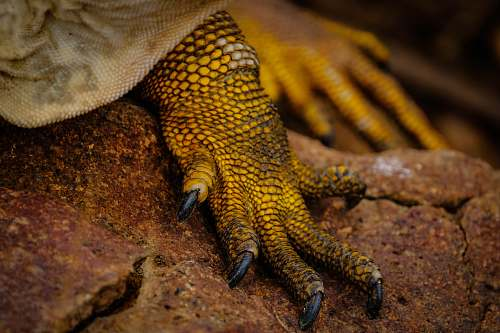 lizard close up photography of lizard's foot reptile