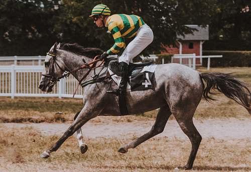 mammal close-up photography of man riding horse horse