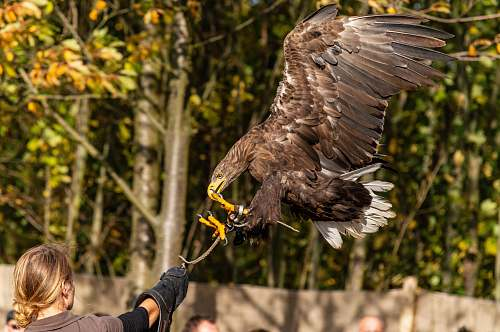 bird eagle flying near woman human