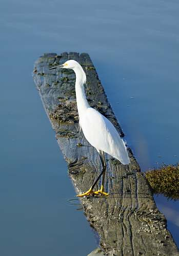 photo bird egret perched on nearby body of water ardeidae free for commercial use images