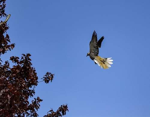 bird flying bird eagle