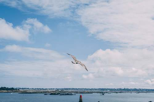 photo bird flying seagull over the large body of water during daytime adventure free for commercial use images