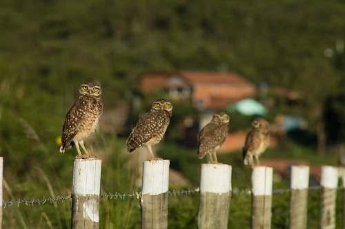 bird four brown birds on white wooden posts during daytime owl