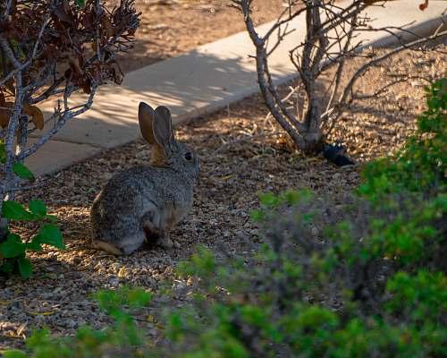 kangaroo gray rabbit on ground near gray pathway at daytime mammal