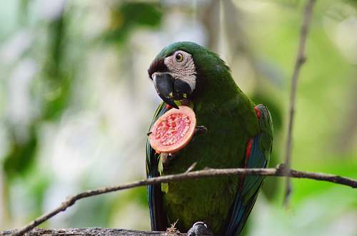 photo bird green macaw parrot free for commercial use images