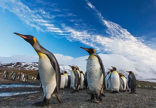 bird group of penguin penguin