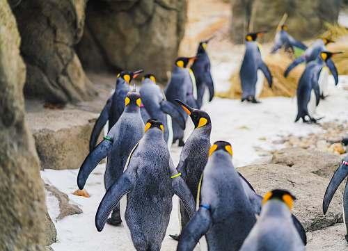 penguin group of penguin walking on mountain bird