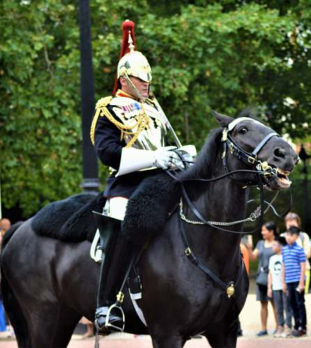 horse man wearing white and black costume riding on black horse mammal