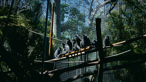 bird monkeys sitting on bridge zoo