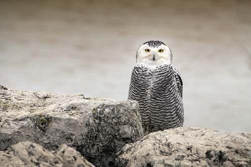 bird owl on rocks during daytime owl