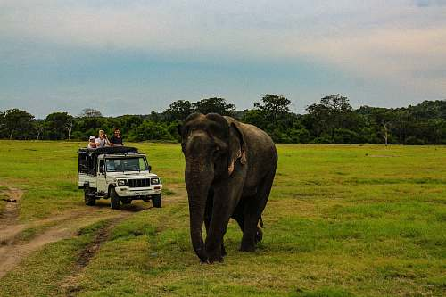 mammal people in white SUV near gray elephant in green field under white and blue skies during daytime elephant