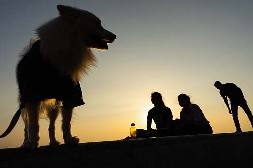 canine people near a dog during golden hour dog