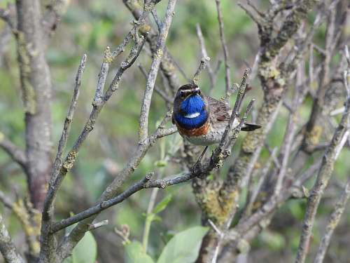 photo jay selective focus photo of blue and black bird bluebird free for commercial use images