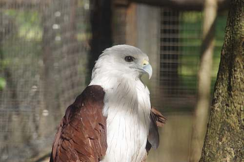 bird selective focus photography of brown and white eagle eagle