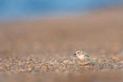 bird selective focus photography of brown bird finch