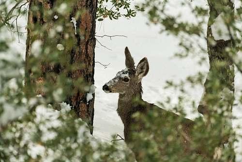 mammal selective focus photography of deer on snowfield kangaroo