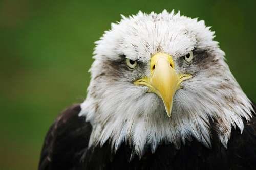bird selective focus photography of eagle eagle
