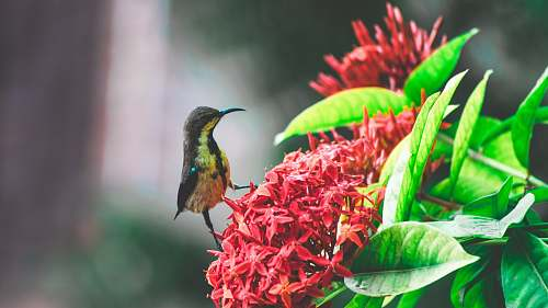 bee eater selective focus photography of gray and brown bird on red ixory plant hummingbird