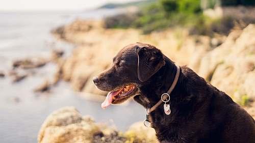 mammal short-coated black dog on beige rock formation canine