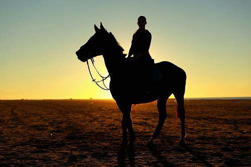 photo mammal silhouette photography of person riding horse horse free for commercial use images