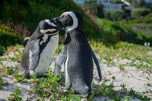 bird two penguins standing on green grass penguin