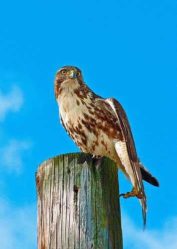 bird white and brown owl on wooden surface hawk