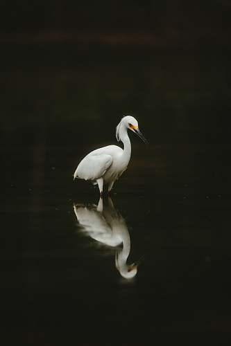 photo bird white bird on water ardeidae free for commercial use images
